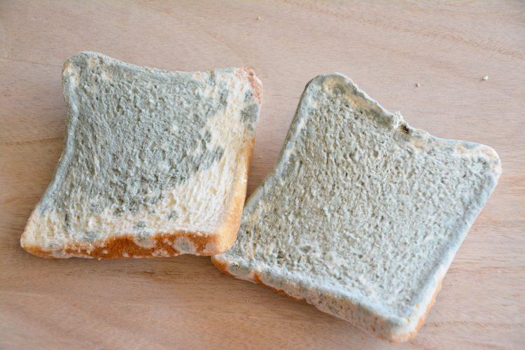 食パンのカビ